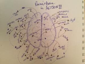 Rawan's brain in action
